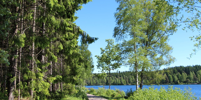 Sognsvann (preview)